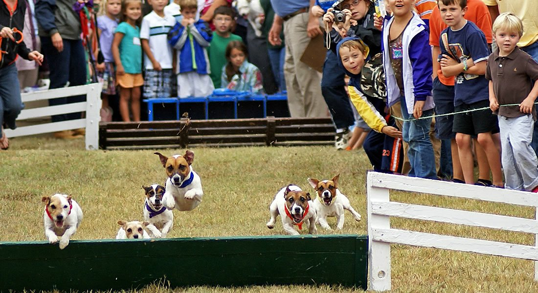 Foxfield Race course - Jack Russel races