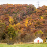 A fall landscape near Charlottesville, VA, colorful trees with white barn and wood fence