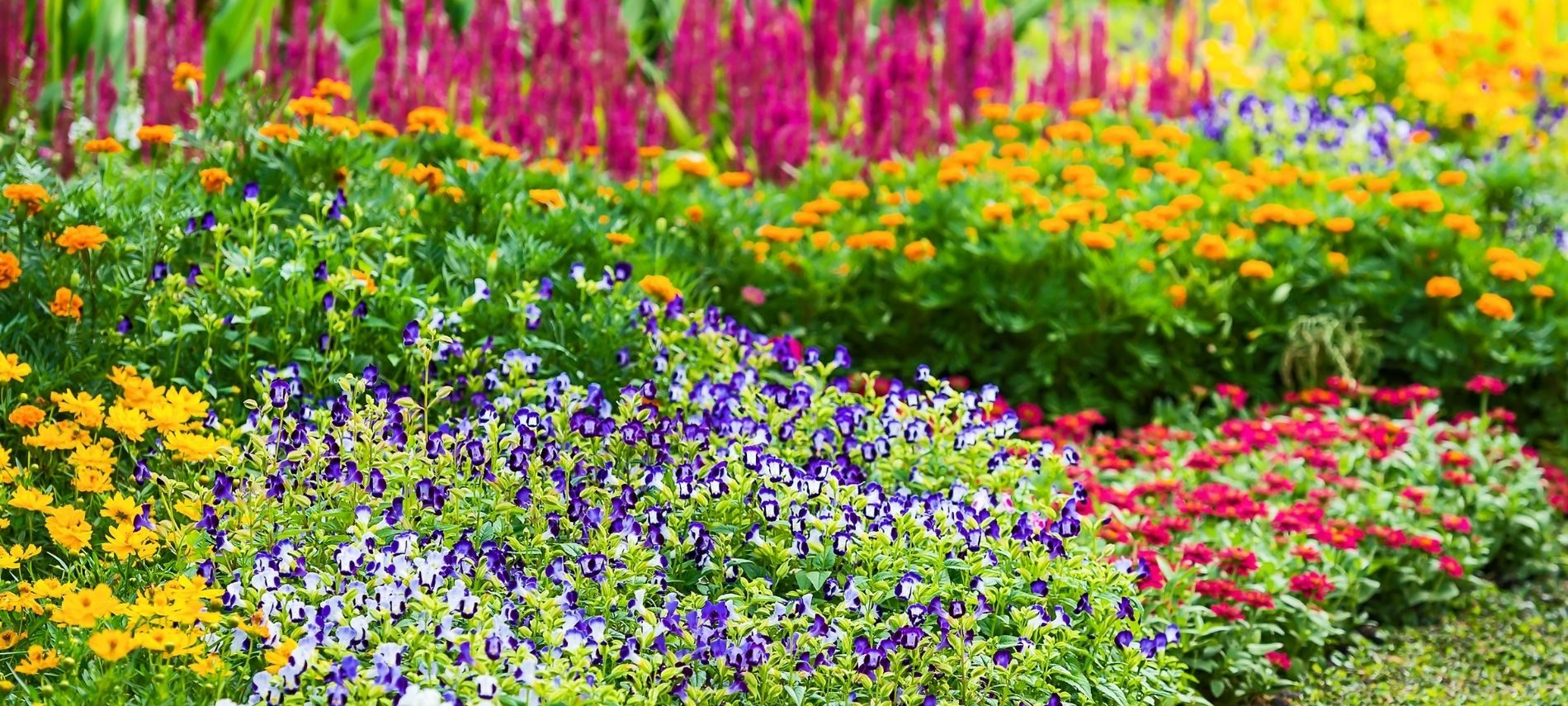 Manicured rows of brightly colored flowers growing outside.